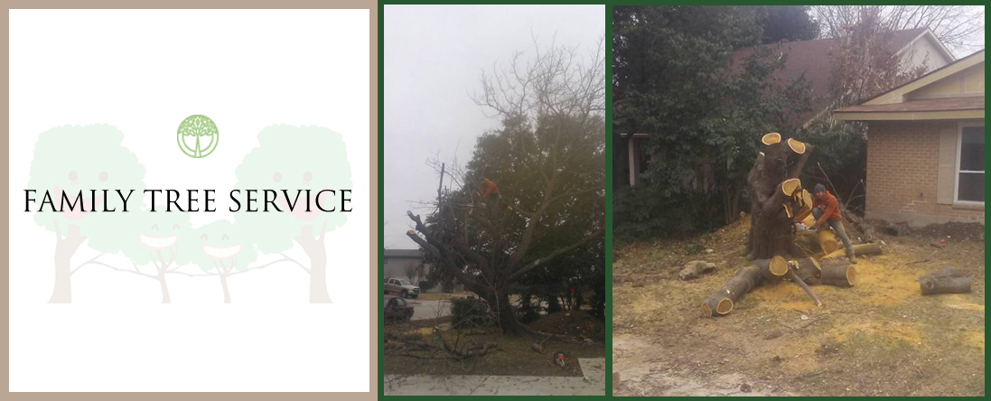 Family Tree Service offers Sod Installation in Lewisville, TX